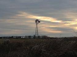 Whitetail_windmill