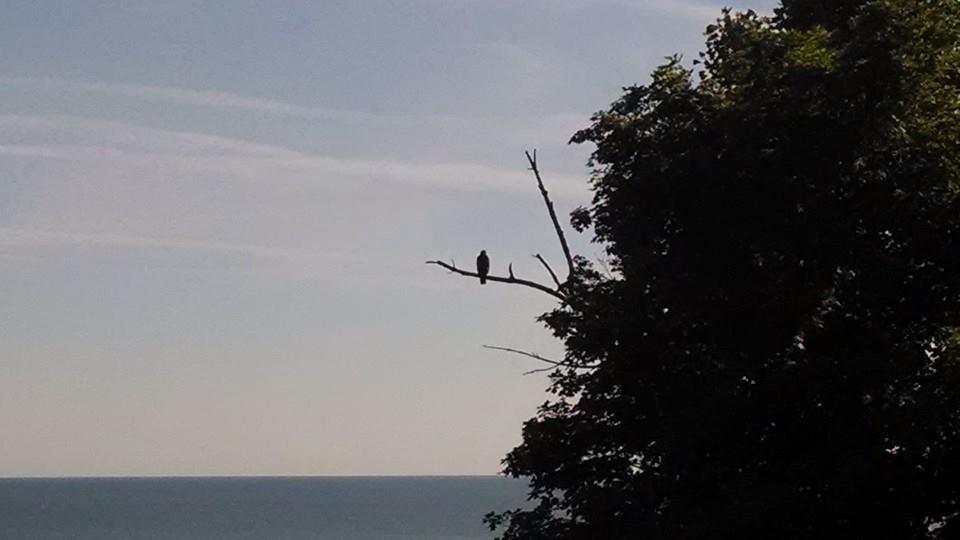 july eagle.jpg