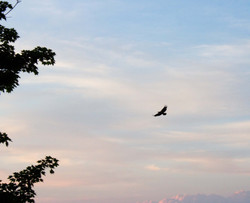 candy eagle.jpg