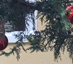 "Fiona Haasz ""ChristmasHangover"""