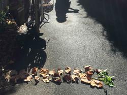 """Leaves & Shadow"""