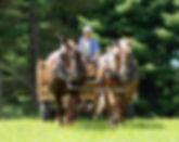horsedrawn-web-1-530x419.jpg