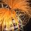 Thumbnail: Pumpkin, Black & White Check/Leopard, Orange Ostrich Feathers