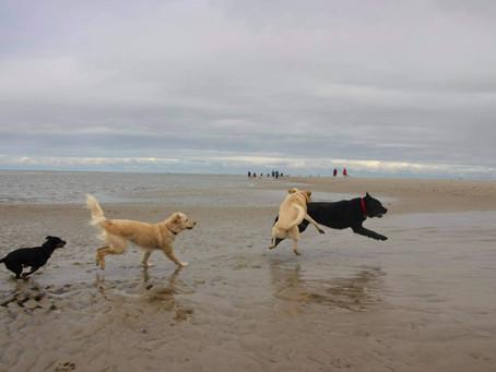 Hundestrände in St. Peter-Ording: Das Urlaubsparadies an der Nordsee!