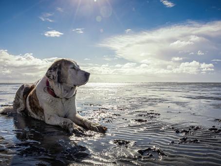 Traumurlaub am Wattenmeer – sogar mit Hund