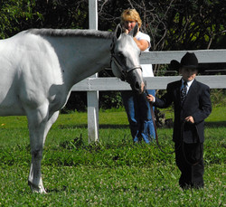 Youth and Open Horse Show