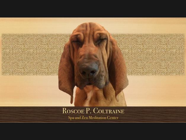 Zen Roscoe (1920x1080)