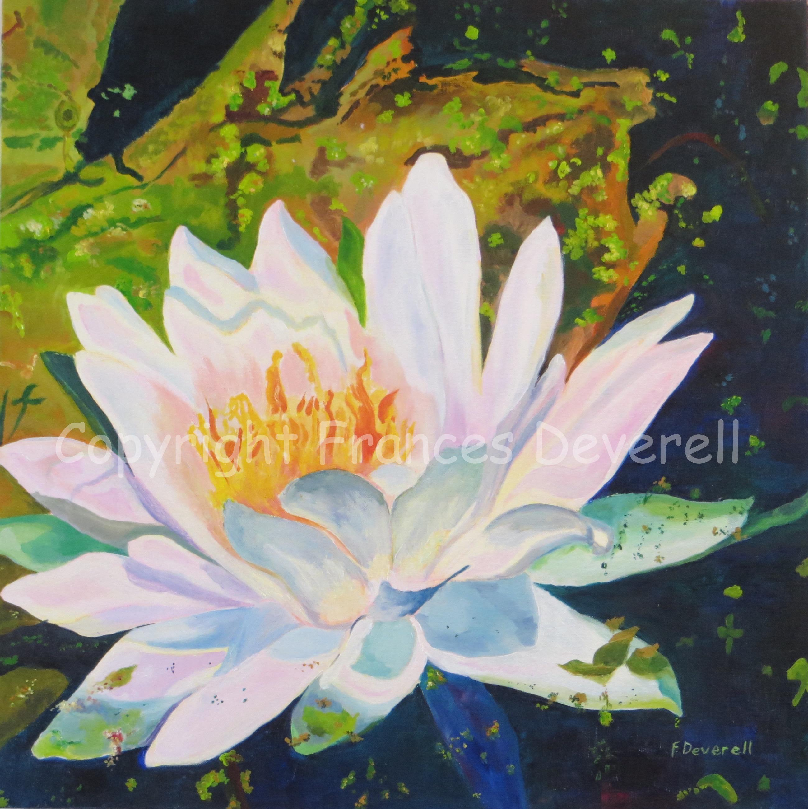 Flaming Lily 24X24