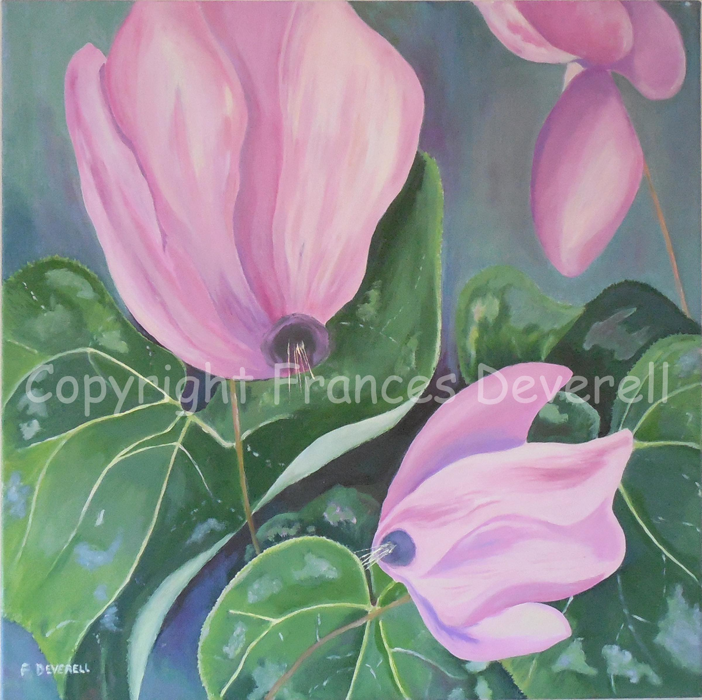 Winter Angels (Cyclamen) 24X24