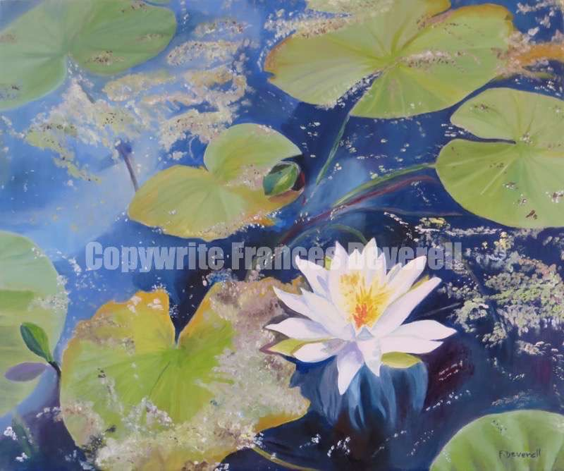 Waterlily 20X24