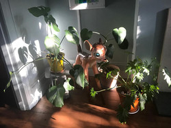 Bambi at home