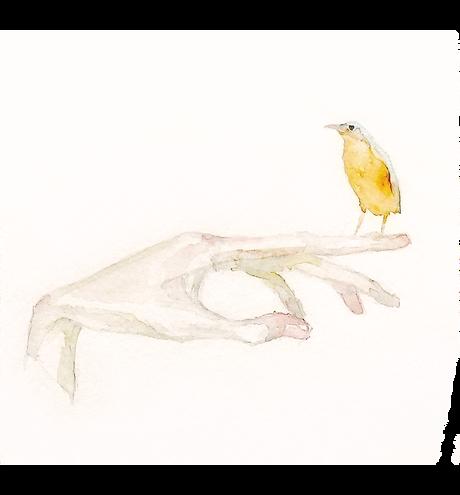 bird copy.png