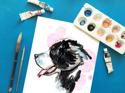 Bernese Mountain Dog Portrait