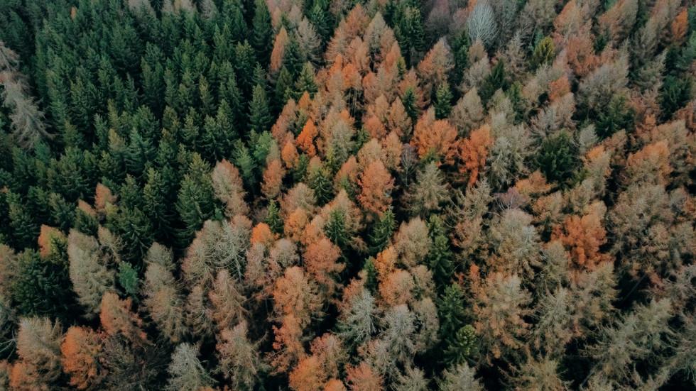Herbst in Kondrau