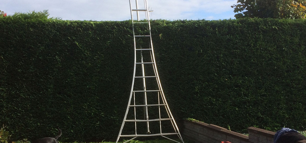 Large ladders leaned against tall green hedge.jpg