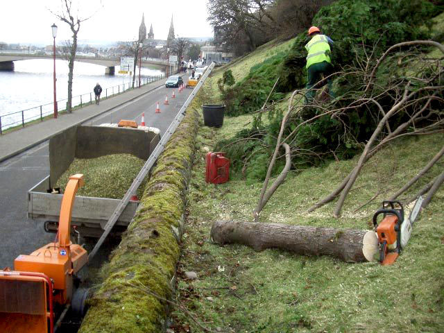 embankment with numerous trees cut down.jpg