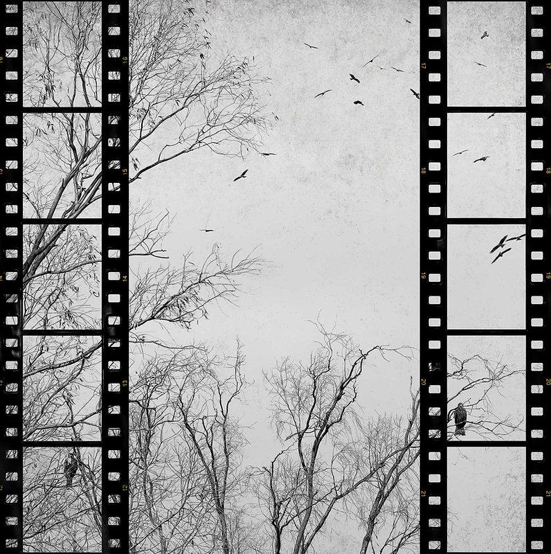 Film and trees B&W background.jpg