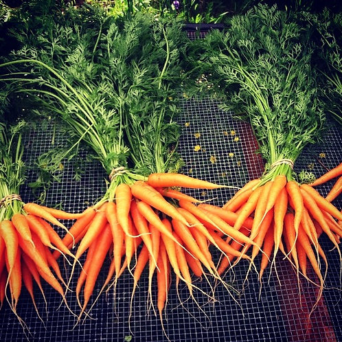 carrot- bunch
