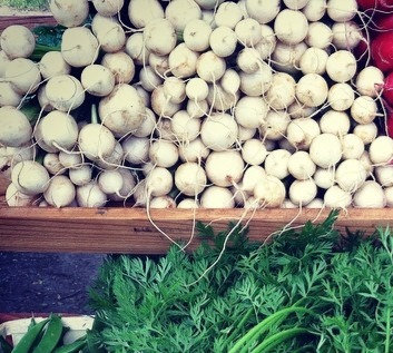 salad turnips- bunch