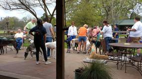 Greyhound Rescue Event