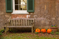 Bench & Pumpkins