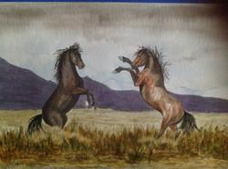 Mustang Debate
