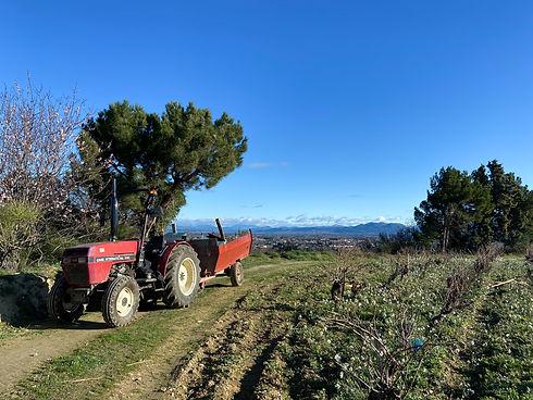 vigne-courthézon-automne