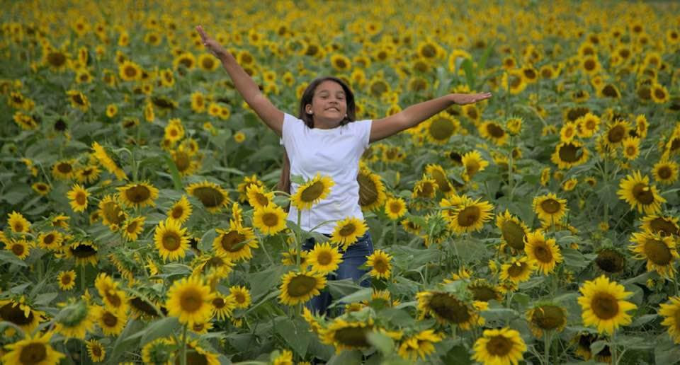 Child with arms spread wide iin the sunflower field.