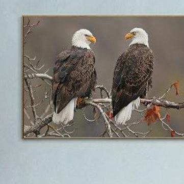 Eagle Bird Porfile Predatory Wildlife Animal Print Wall Painting Canvas Art Pain