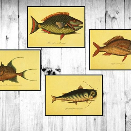 Many Kind of Fish Map Vintage Kraft Paper Classic Movie Poster Map Home Decor Ga