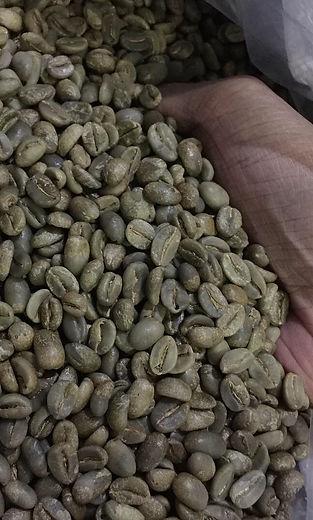 Greenbean Arabica Robusta