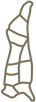 Carcass Cutout Outline Light Brown.png