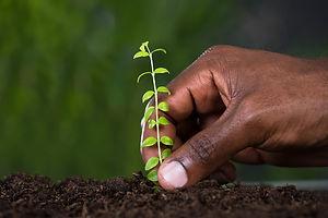 Gardeningblackhands.jpg