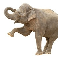 BIG DATA - EMBRACING THE ELEPHANT IN THE ROOM