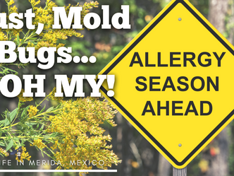 Dust, Mold & Bugs...Oh My! - Wandering Soup