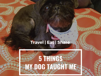 5 Things My Dog | Wandering Soup