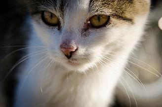 cat-256187_1280.jpg