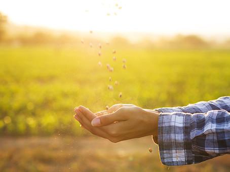 Prayer For A Season of Planting