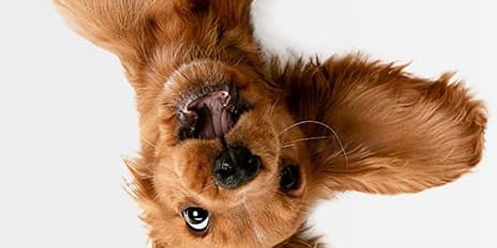 Curso de Sanación Tibetano para Mascotas