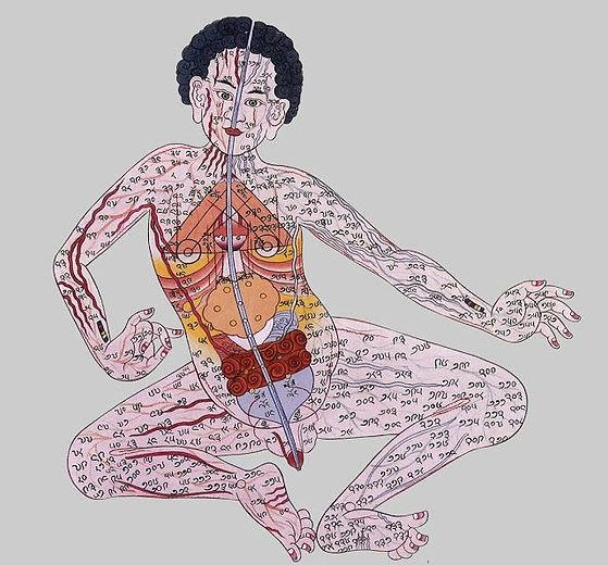 plantas-y-salud-medicina-tibetana-compre