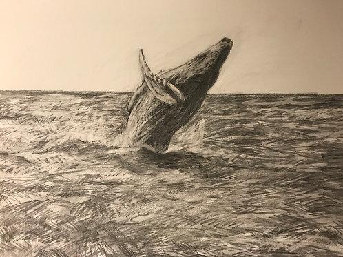 Humpback Breaching-In Loving Memory of Ann