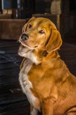 Dog Portrait 01.jpg