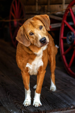 Dog Portrait 04.jpg