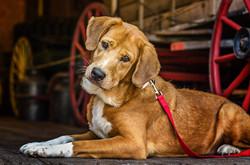 Dog Portrait 03.jpg