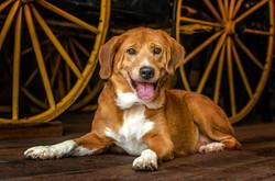 Dog Portrait 05.jpg