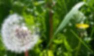 Access Consciousness Heiderose Scheerer Certified Facilitator in 71665 Vaihingen an der Enz und weltweit