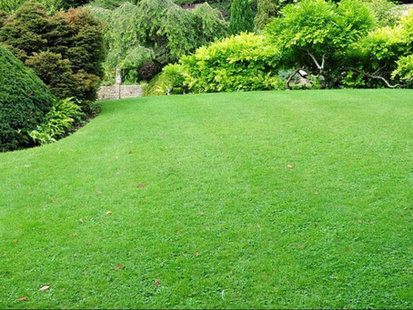 8 Steps to Keeping Your Yard Green and Healthy