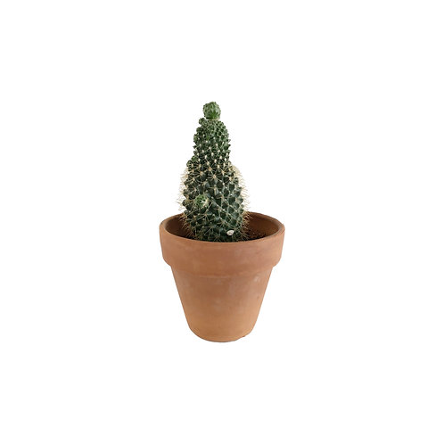 Live Potted Plant #7