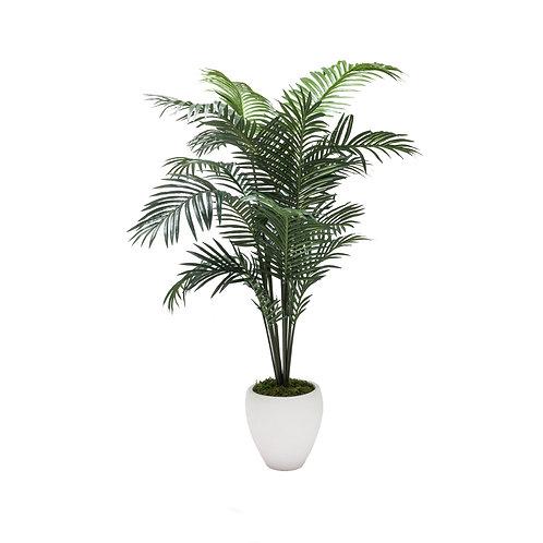 XL Palm in White Planter