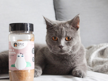 One Way to Add Nutrition to Your Pet's Diet